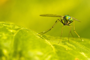 """<alt=""""Mosquito""""/>"""