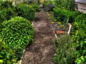 """<alt=""""herb garden""""/>"""