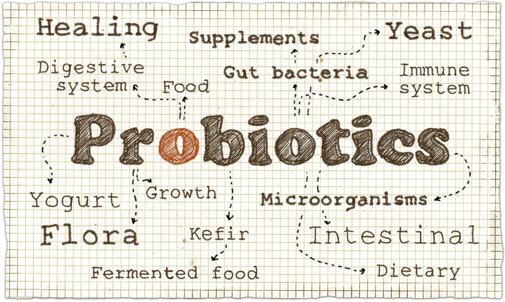 3 Reasons to Add Probiotics to Your Daily Routine
