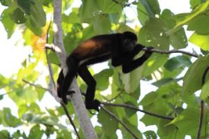 """<alt=""""Monkey in a Tree""""/>"""