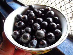 "<img src=""image.gif"" alt=""acai berries"" />"